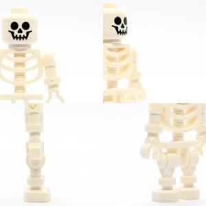 Skeleton with Standard Skull